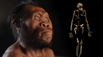 0000014f-b66e-deef-a9ef-b66e2cbe0000-new-human-ancestor-discovered-homo-naledi-exclusive-video